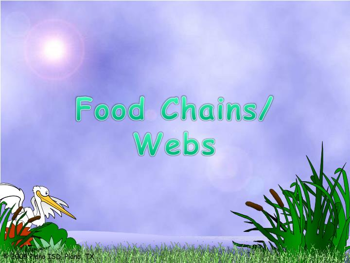 Food Chains/ Webs