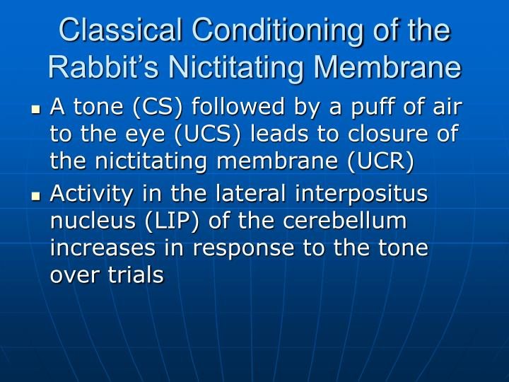 Classical Conditioning of the Rabbit's Nictitating Membrane