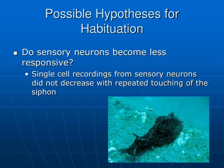 Do sensory neurons become less responsive?