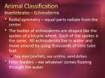animal classification invertebrates echinoderms