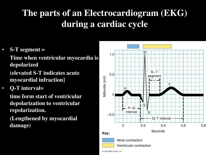 The parts of an Electrocardiogram (EKG) during a cardiac cycle