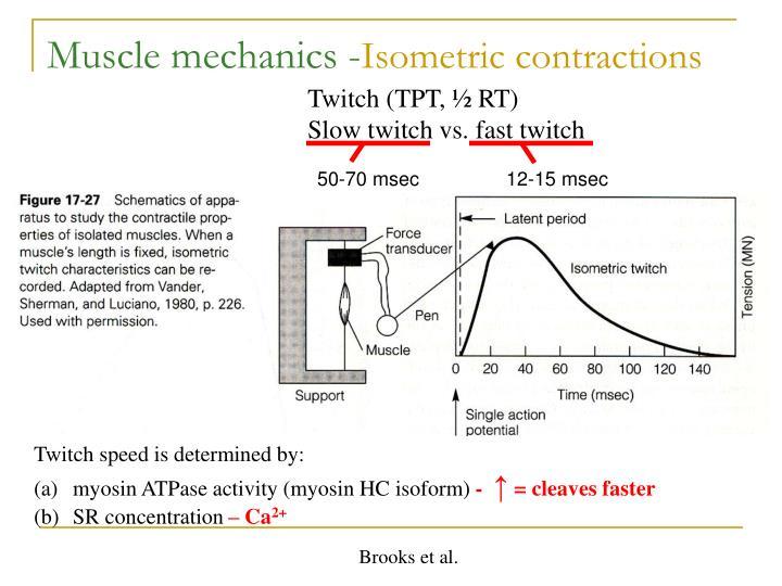 Muscle mechanics -