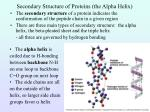 secondary structure of proteins the alpha helix