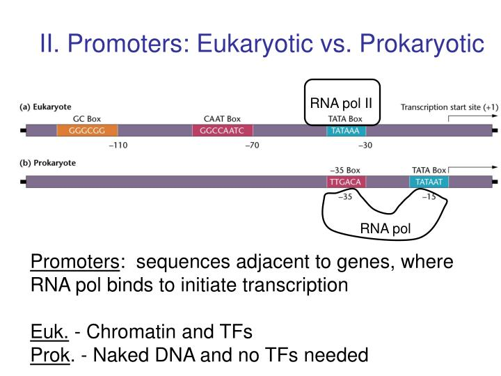 II. Promoters: Eukaryotic vs. Prokaryotic