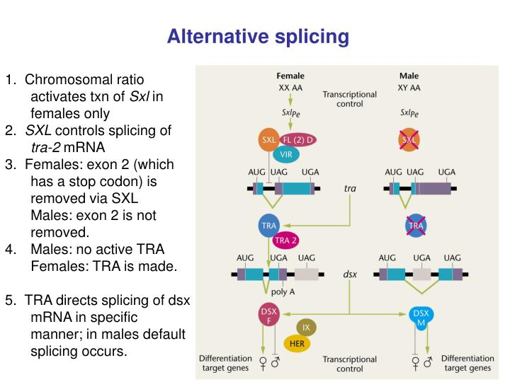 Alternative splicing
