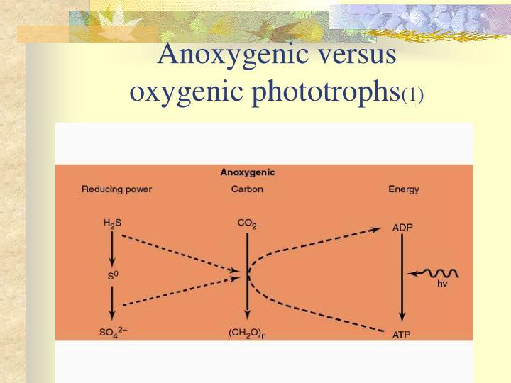 Anoxygenic versus