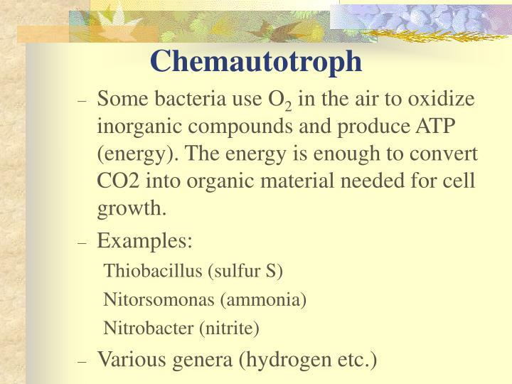 Chemautotroph