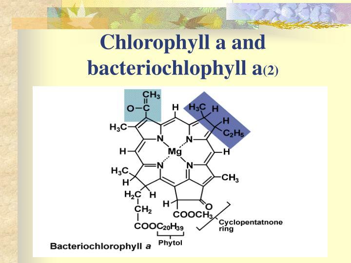 Chlorophyll a and bacteriochlophyll a