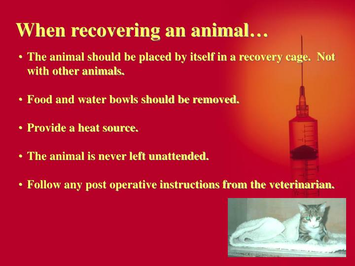 When recovering an animal…