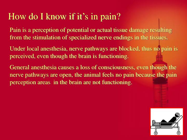How do I know if it's in pain?