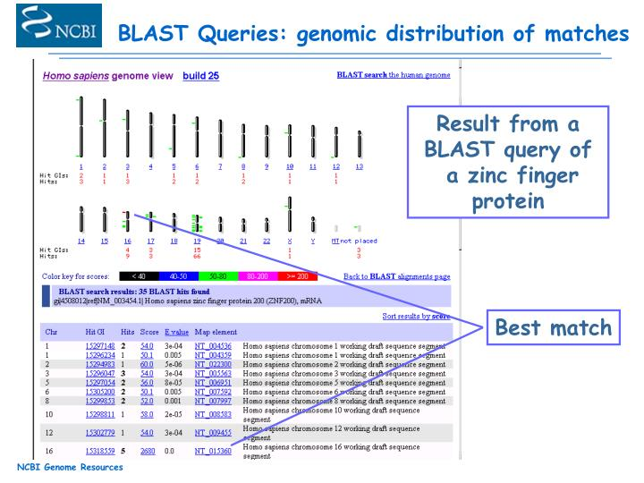 BLAST Queries: genomic distribution of matches