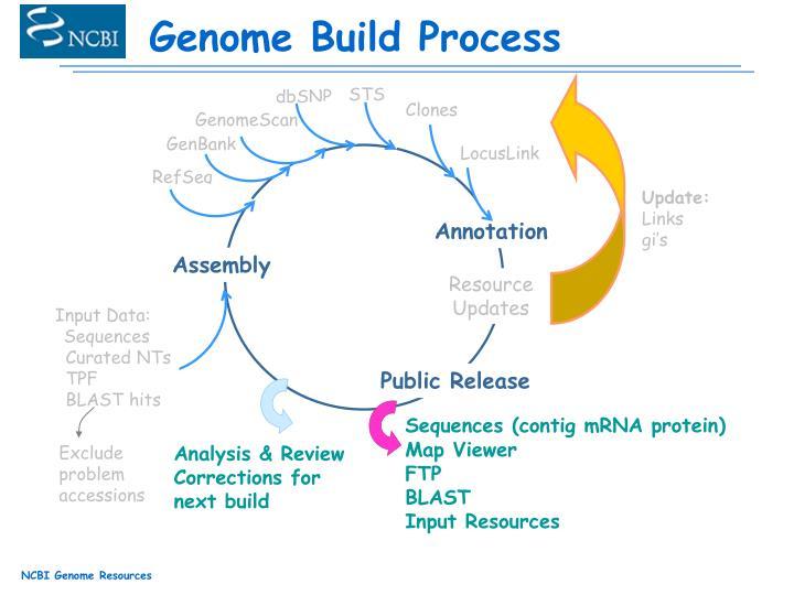 Genome Build Process