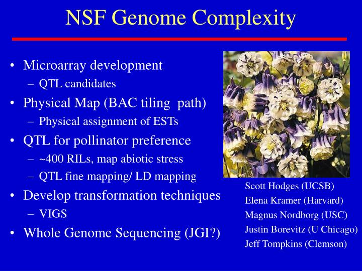 NSF Genome Complexity