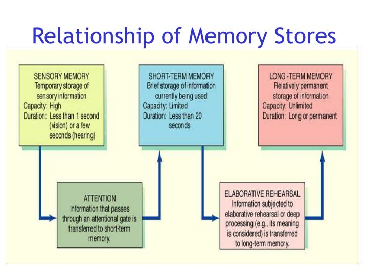 Relationship of Memory Stores