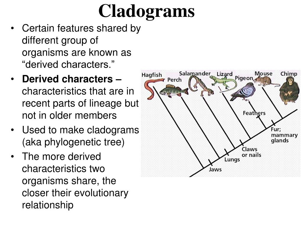 PPT - Modern Evolutionary Classification Notes- Ch. 18.2 ...