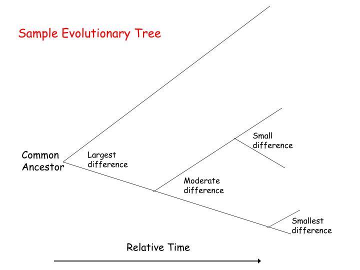 Sample Evolutionary Tree