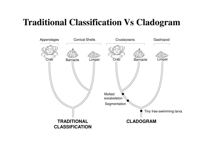 Traditional Classification Vs Cladogram