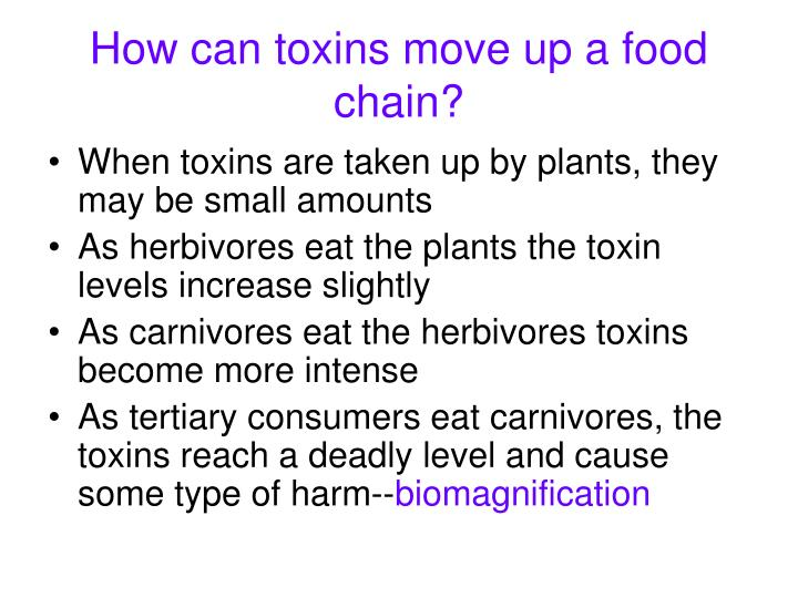 How can toxins move up a food chain?