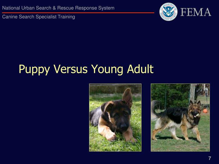 Puppy Versus Young Adult