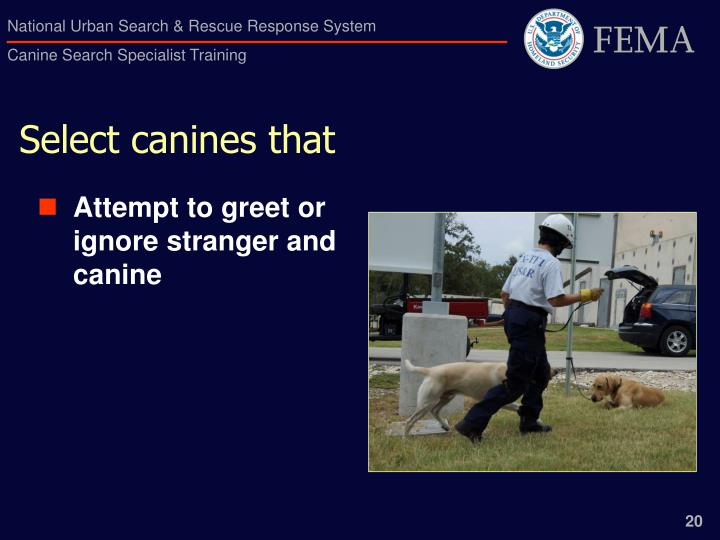 Select canines that