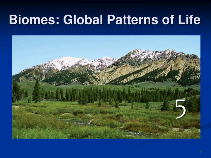 biomes global patterns of life n.
