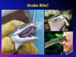 snake bite1