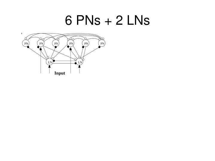 6 PNs + 2 LNs