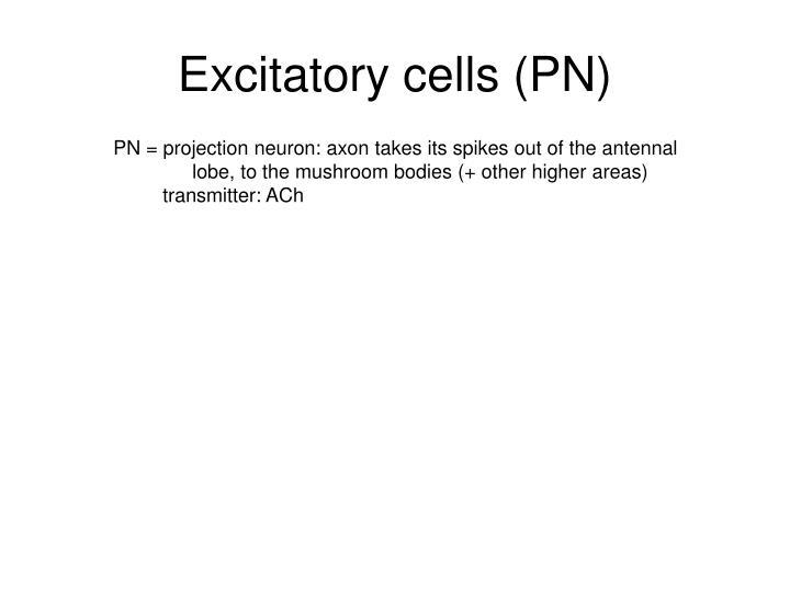 Excitatory cells (PN)