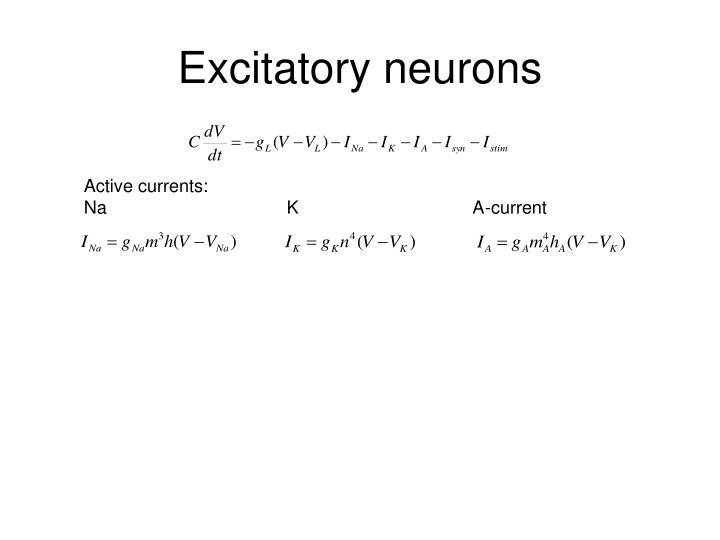 Excitatory neurons