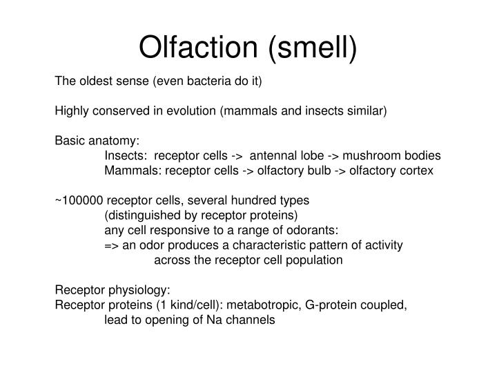 Olfaction (smell)