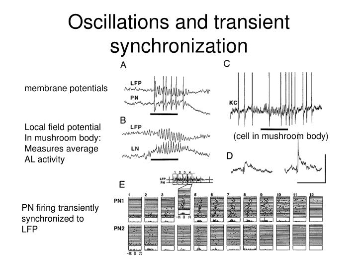 Oscillations and transient synchronization