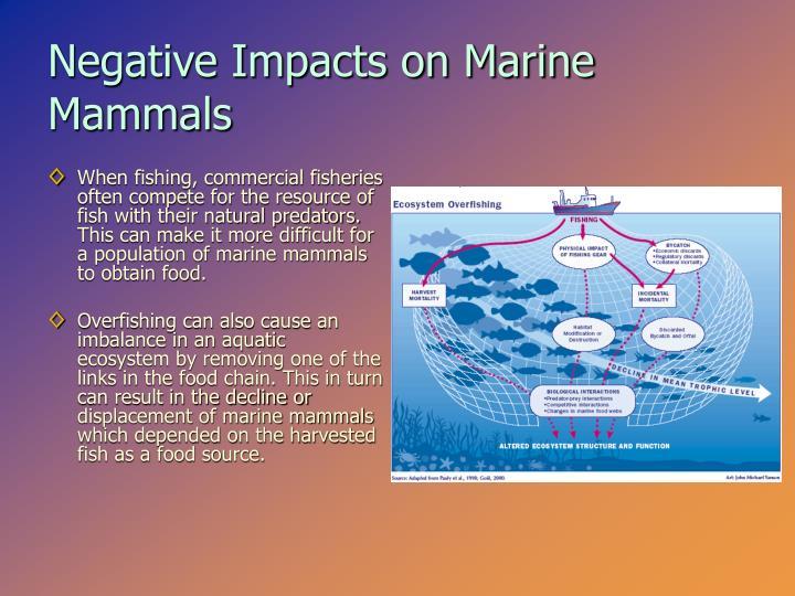 Negative Impacts on Marine Mammals