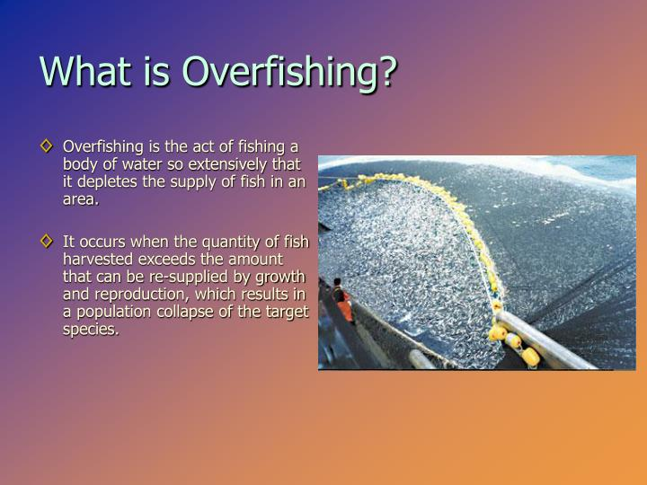 What is Overfishing?