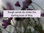 rough winds do shake the darling buds of may