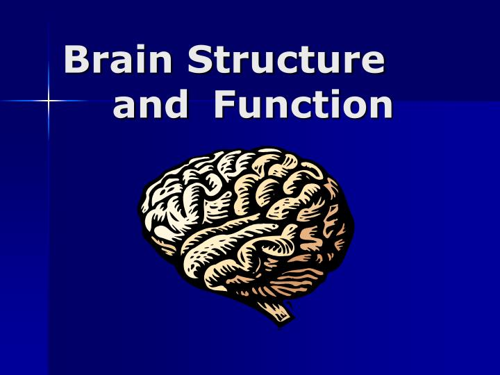 brain structure and function n.
