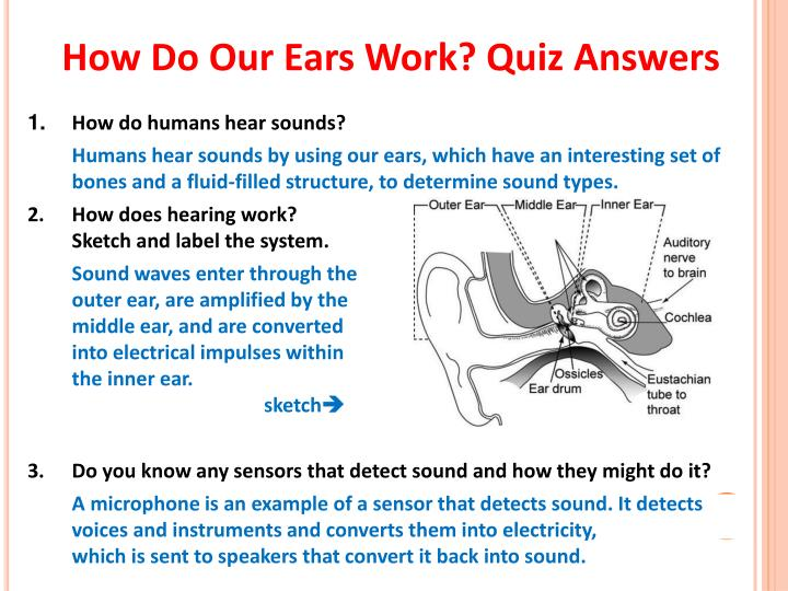 How do our ears work quiz answers