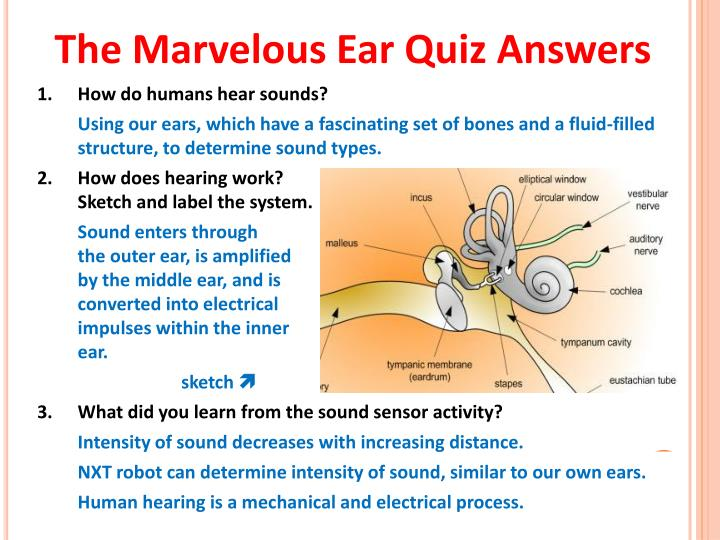 The Marvelous Ear Quiz Answers