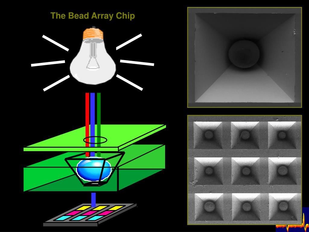 The Bead Array Chip