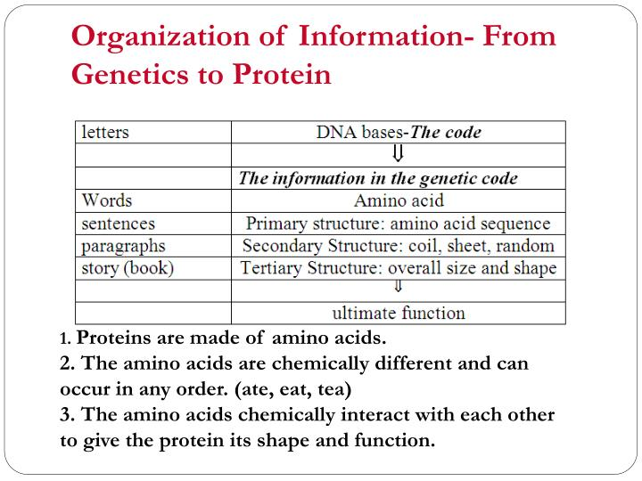 Organization of information from genetics to protein