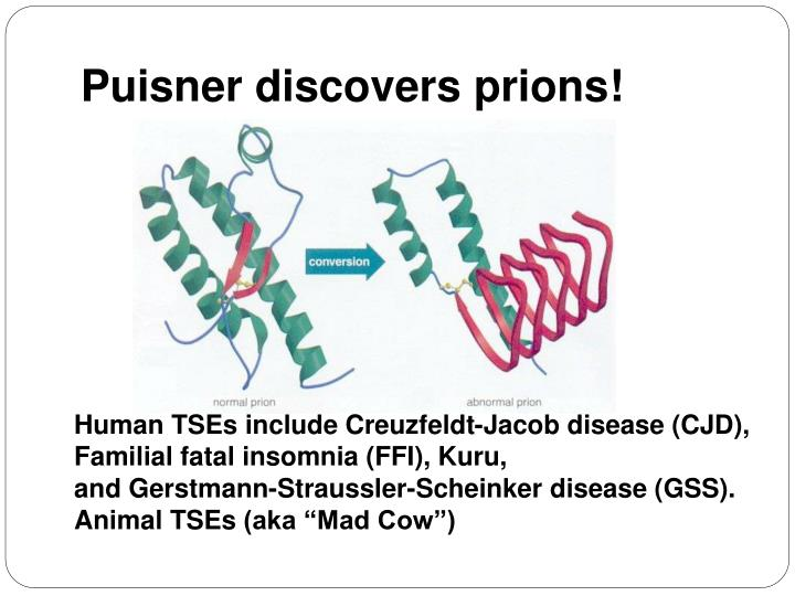 Puisner discovers prions!