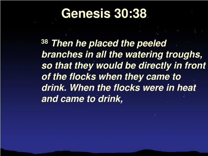 Genesis 30:38