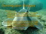osmoregulation strategies11