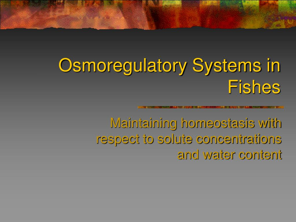 osmoregulatory systems in fishes l.