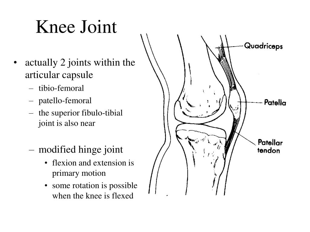 PPT - Knee Joint PowerPoint Presentation - ID:143519 Hinge Joint Knee
