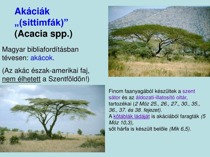 """Akáciák """"(sittimfák)"""""""