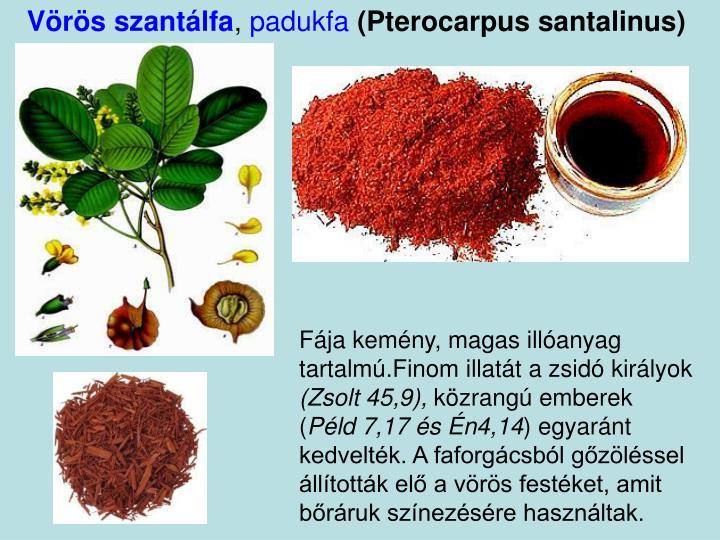 Vörös szantálfa