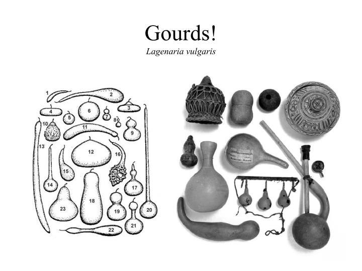 Gourds lagenaria vulgaris