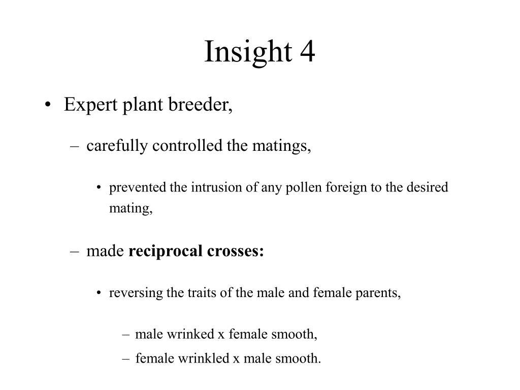 Insight 4