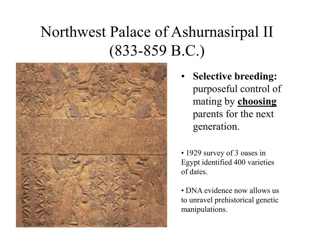 Northwest Palace of Ashurnasirpal II (833-859 B.C.)