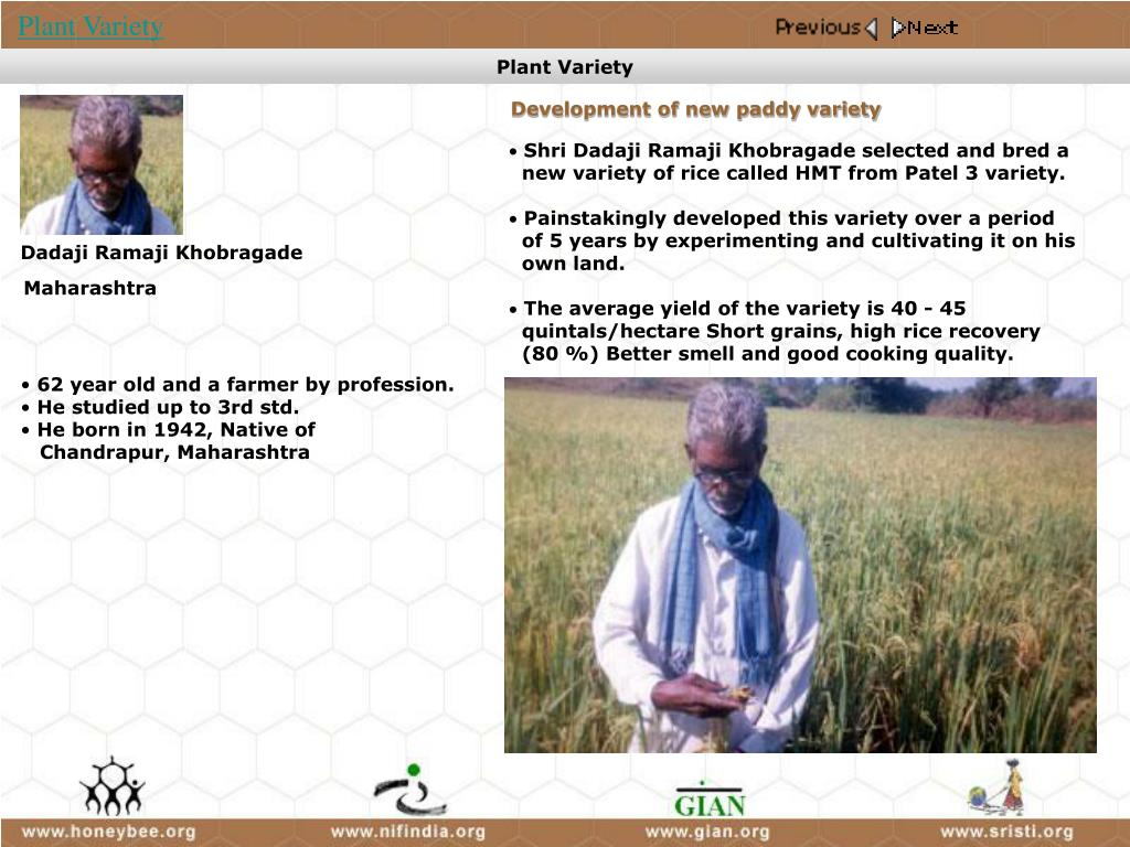 Development of new paddy variety